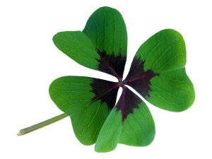 lucky symbol - four leafed clover